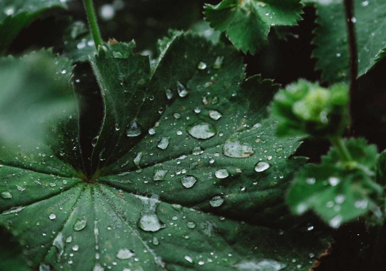 skn-leaves-drops-2